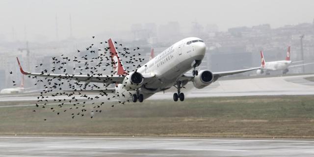 avions oiseaux