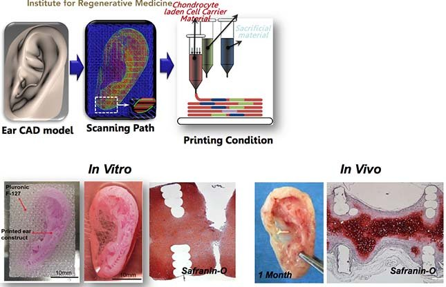 3D Bioprinting to Regrow Your Own Organs? - Substance ÉTSSubstance ...