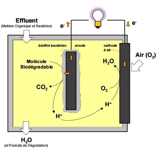 Une pile à combustible microbienne