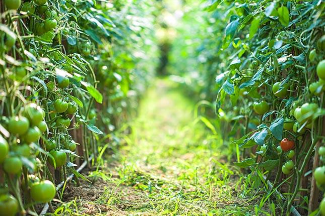 Les végétaux poussent mieux à la lumière du jour