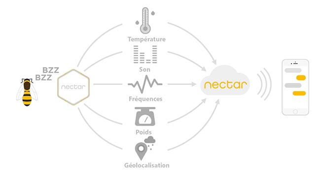 La technologie innovatrice de Technologies nectar sauvera des ruches