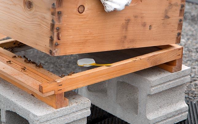Nectar peut évaluer la santé des ruches
