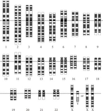 Le génome humain est constitué de l'ensemble de l'information portée par nos 23 paires de chromosomes.