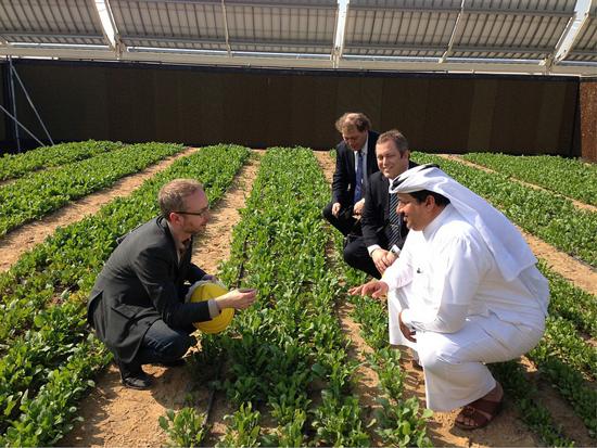 Khalifa Al Sowaidi, directeur général de Qafco (à droite) avec Joakim Hauge, CEO du Projet Forêt Sahara et son frère discutent avec le ministre norvégien de l'environnement, Bård Vegar Solhjell(à gauche) dans un champ de laitue. Source [Img2].