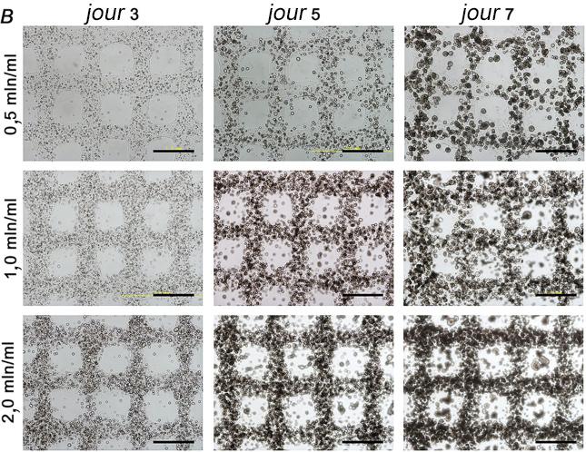 croissance des cellules