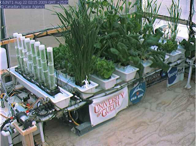 Plantes matures