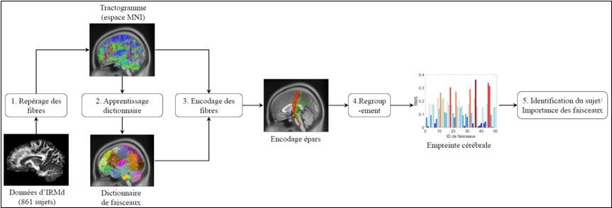 Processus à suivre pour déterminer une empreinte cérébrale.