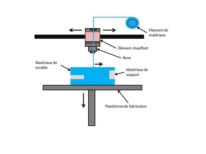 Le moule de l'estomac a été imprimé au moyen d'un matériau soluble à l'eau