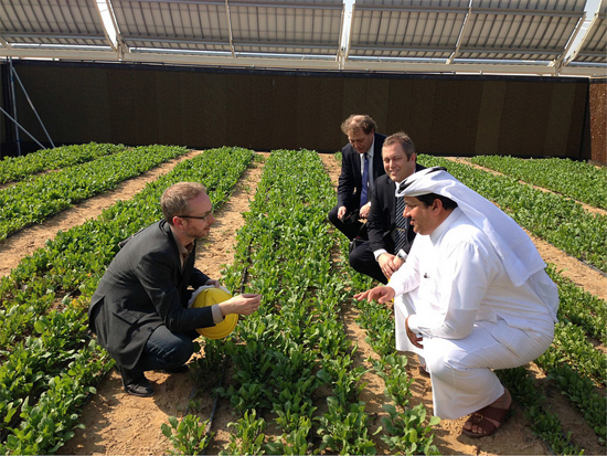 Khalifa Al Sowaidi, Director General of Qafco (right) with Joakim Hauge, CEO of The Sahara Forest and his brother discuss with the Norwegian Minister of the Environment, Bård Vegar Solhjell(left) in a culture of lettuce. Source [Img2].