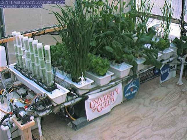 Plantes ayant poussé dans la serre d'Arthur Clarke