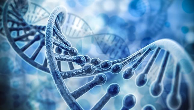 Substance Les biomatériaux en science et technologie biomédicales ...