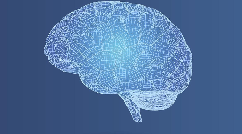 L'empreinte cérébrale permet d'identifier les personnes ainsi que leurs frères et soeurs.