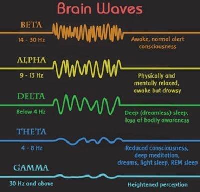 ondes cérébrales du cerveau