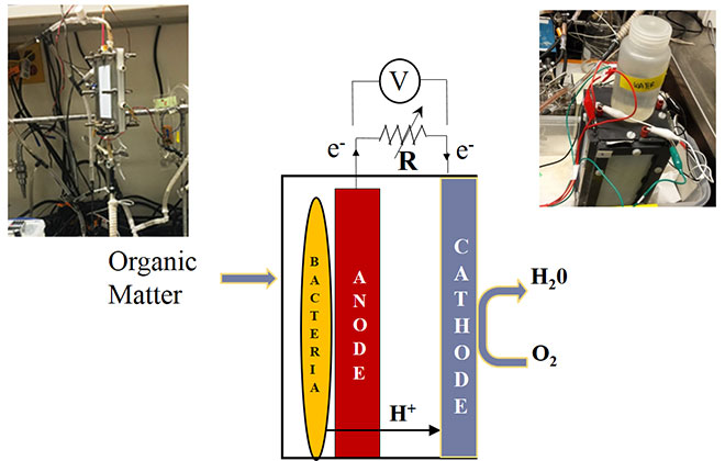 The functionning of a microbial fuel cell