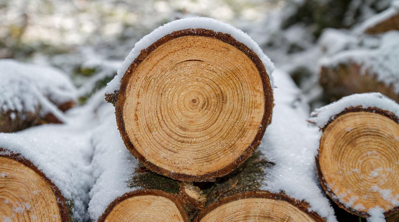 Bûches de bois avant densification