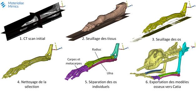 Segmentation des os d'une tomographie de patte de chien