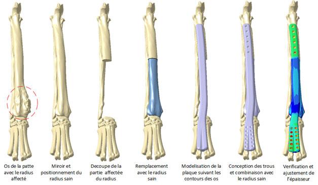 Comment l'endoprothèse pour patte de chien est conçu