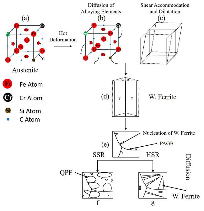 Dynamic transformation of austenite to a ferrite phase in low carbon steel
