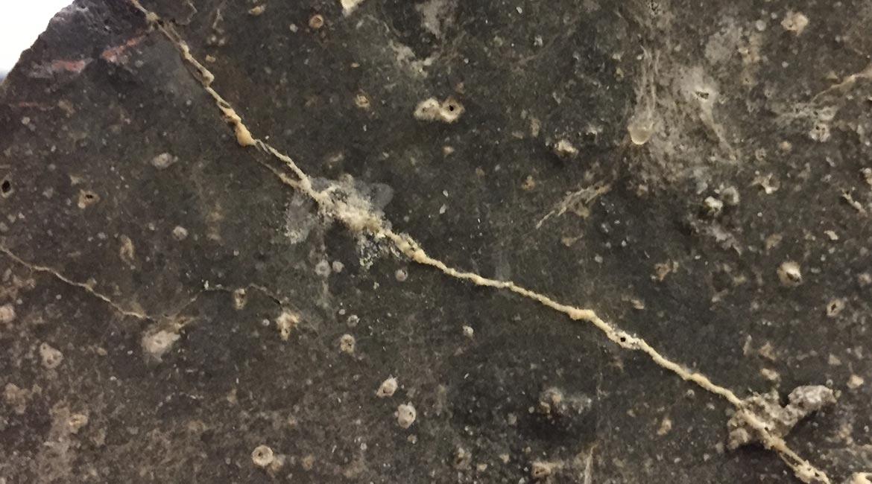 Self-Healing Concrete