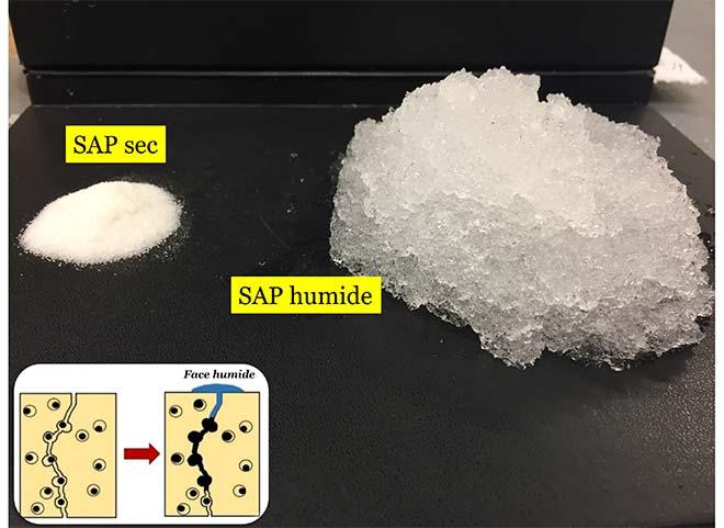 Quelle quantité d'eau peut absorber un polymère super absorbant?